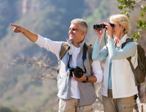 Best Times for Bird-Watching in Florida